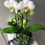 orhidee ghiveci livrare flori