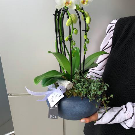 orhidee livrare pitesti